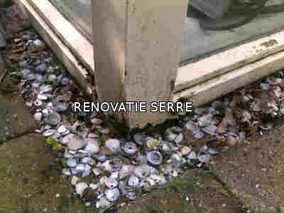 RENOVATIE SERRE